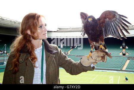 London, UK. 27th June, 2016. Rufus The Wimbledon Hawk Pigeons Scarer The Wimbledon Championships 2015 The Wimbledon - Stock Photo