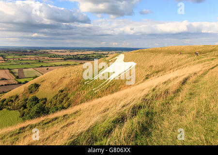 The Westbury White Horse Chalk Hill figure, on the edge of Salisbury Plain, Wiltshire, South England, United Kingdom. - Stock Photo
