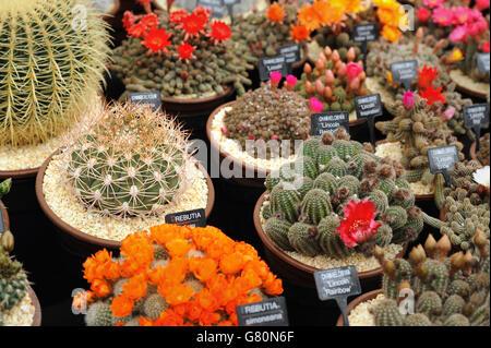 2015 RHS Chelsea Flower show - Stock Photo