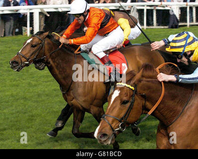 Horse Racing - Stanleybet Lincoln Meeting - Doncaster Racecourse - Stock Photo