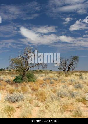 Kgalagadi Transfrontier Park, Africa - Stock Photo