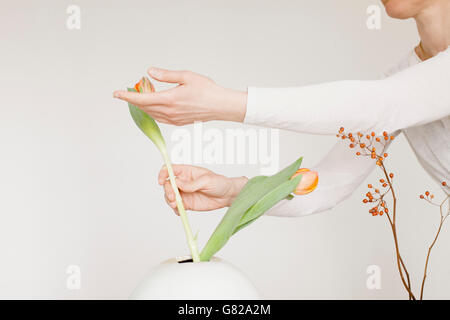 Midsection of mid adult woman arranging flowers in vase against white background - Stock Photo