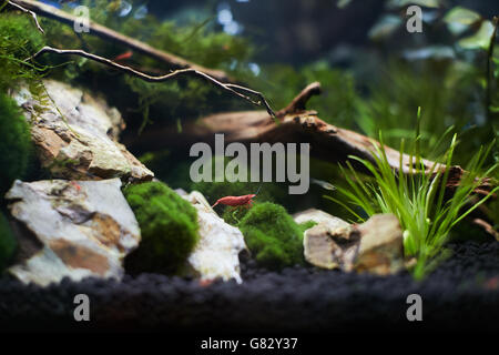 nano aquarium - Stock Photo