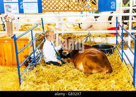 Young girl with calf young cow petting friend on farm animal stroking friend friends UK England GB - Stock Photo