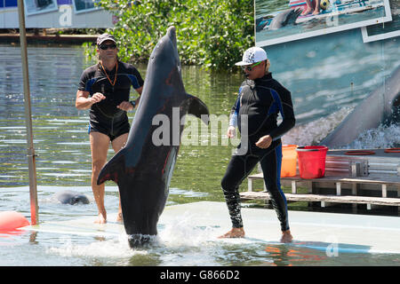 Dolphin with it's trainer at a dolphin show in Varadero, Cuba - Stock Photo