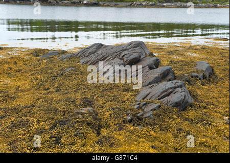 sea weed and rocks on Atlantic ocean shoreline - Stock Photo