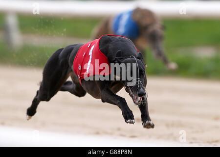 Greyhound Racing - Newcastle Greyhound Stadium - Stock Photo