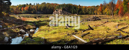 Panoramic view of a drained beaver pond after a beaver dam was removed, Killarney Provincial Park, Ontario, Canada - Stock Photo