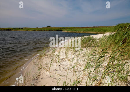 Naturschutzgebiet Riedensee nature reserve, Bukspitze or Buk cape, Baltic resort Kuehlungsborn, Mecklenburg-Western - Stock Photo