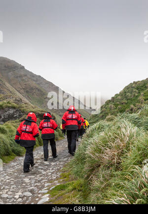 Ponant's Le Soleal Expedition ship passengers hiking on Macquarie Island, Australian sub-Antarctic - Stock Photo