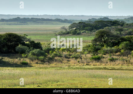 Trees and landscape, Maputo Special Reserve; Mozambique. - Stock Photo