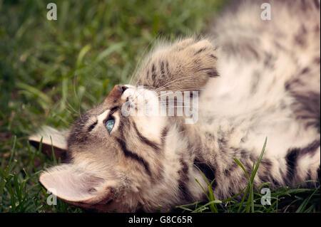 Tabby kitten lying on grass - Stock Photo
