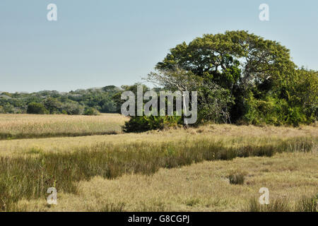 Marsh area, Maputa Special Reserve, Mozambique. - Stock Photo