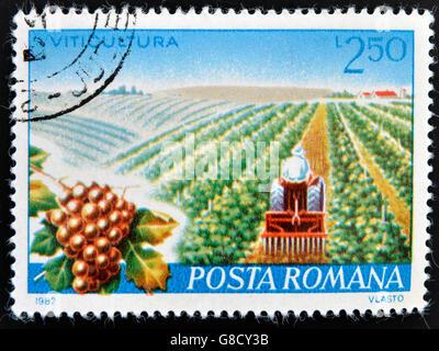 ROMANIA - CIRCA 1982: A stamp printed in Romania dedicated to viticulture, circa 1982 - Stock Photo