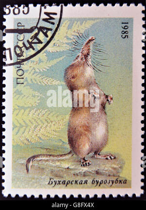 UNION OF SOVIET SOCIALIST REPUBLICS - CIRCA 1985: a stamp printed in USSR shows a Pamir shrew (Sorex bucharensis), - Stock Photo