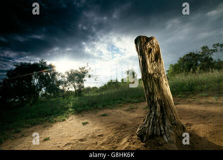 Rubbing pole, Lowveld, South Africa. - Stock Photo