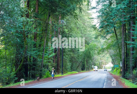 Guerneville Calfornia redwoods on road near Northwood in Russian River Valley Sonoma County CA - Stock Photo