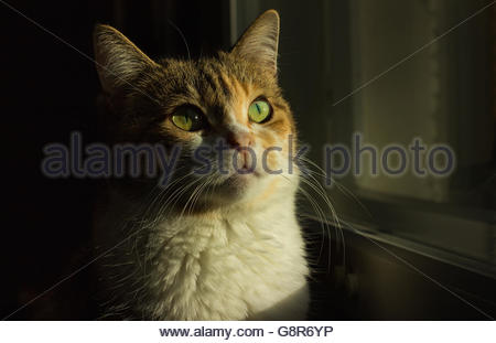Cat looking up - Stock Photo