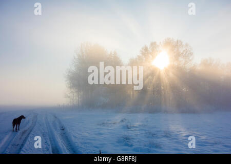 Dog in Winter Landscape - Stock Photo