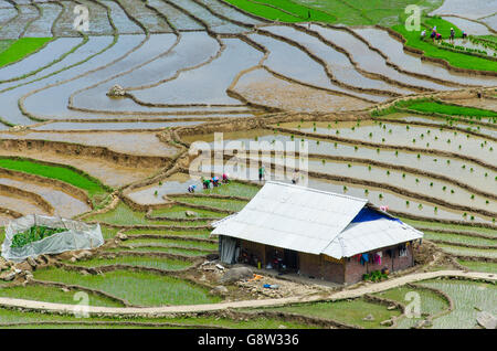 Unrecognizable farmers planting rice in traditional rice paddies in North Vietnam. - Stock Photo