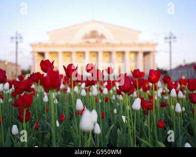Tulips near the Old Stock Exchange in the St.Petersburg, morning, May, flowering flower beds - Stock Photo