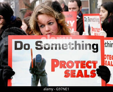 ANIMALS Seals_Ireland - Stock Photo