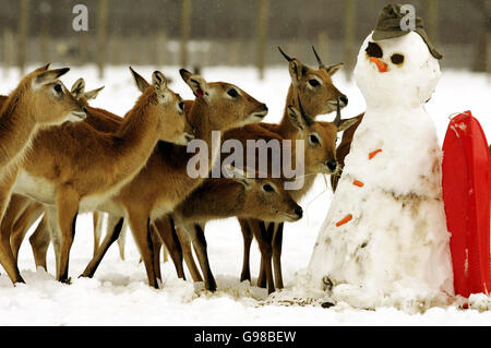 Snowy Weather In Britain - Stock Photo
