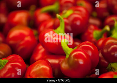 Close-up of fresh Hot Cherry Peppers at a far stand. - Stock Photo