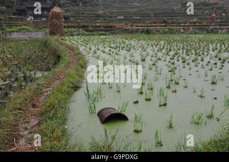 Flooded Rice Field in Zhaoxing, Guizhou, China - Stock Photo