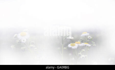 Daisy Flower field on a sunny day. Nature Floral Background In Vintage Style - Stock Photo