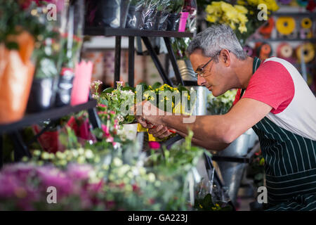 Male florist checking a flowers - Stock Photo