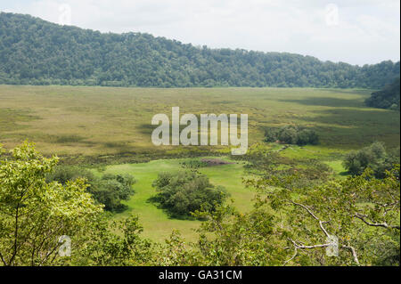 Buffalo herd in Ngurdoto Crater, Arusha National Park, Tanzania - Stock Photo