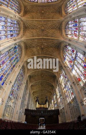 Interior of Kings College Chapel, with nave, stained glass and organ, Cambridge University, Cambridgeshire, England, - Stock Photo