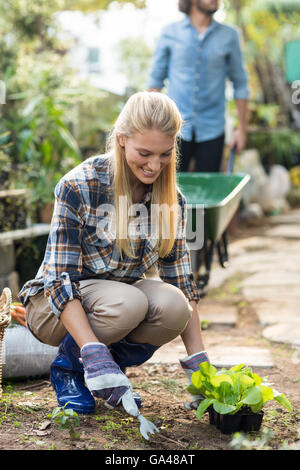 Gardener planting while man working in background - Stock Photo
