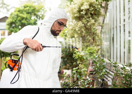 Male scientist spraying pesticides on plants - Stock Photo