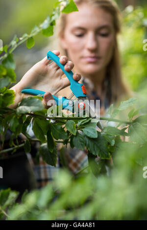 Gardener pruning plants with shears - Stock Photo
