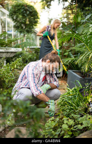 Male gardener planting at community garden - Stock Photo