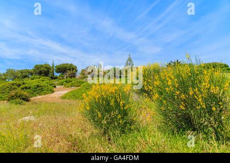 Yellow flowers on green meadow in spring season, Algarve region, Portugal - Stock Photo