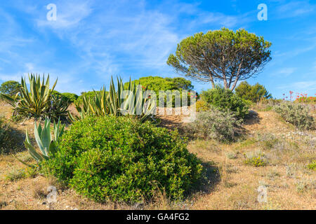 Tropical plants on green meadow with pine tree in background, Algarve region, Portugal - Stock Photo