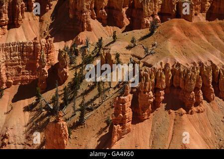 The beautiful but often ignored landscape of Cedar Breaks National Monument in Utah. - Stock Photo
