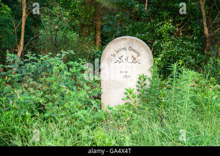 Single Concrete headstone contrasts with greenery of bush - Stock Photo