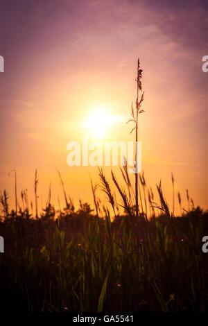 Coastal tall grass with sunset - Stock Photo