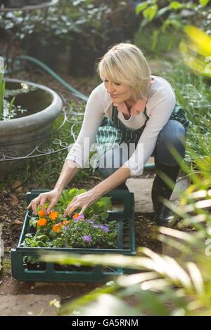 Female gardener arranging plants in crate - Stock Photo