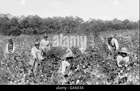 A group of African Americans picking cotton near Savannah, Georgia shortly after emancipation. Photo by Launey & - Stock Photo