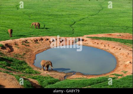 Aerial view of Elephants (Loxodonta africana) at watering hole in the rainy season, Tsavo East National Park, Kenya. - Stock Photo
