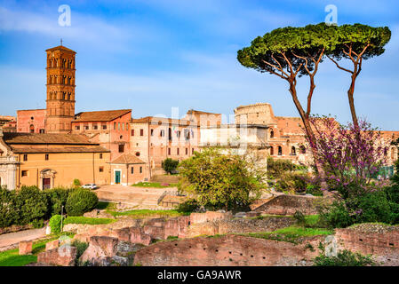Rome, Italy. Amazing scenery with Roman Forum ruins and Colosseum, Flavian Amphiteatre. - Stock Photo