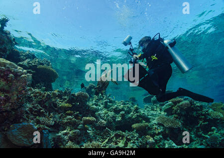 Female Scuba diver with Hawksbill Sea Turtle, Eretmochelys imbricata, on coral reef in Maldives, Indian Ocean - Stock Photo