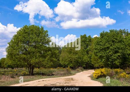 Germany, Troisdorf, North Rhine-Westphalia, the Wahner Heath. - Stock Photo