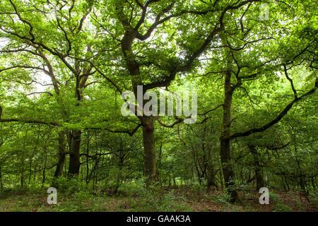 Germany, Troisdorf, North Rhine-Westphalia, wood in the Wahner Heath. - Stock Photo