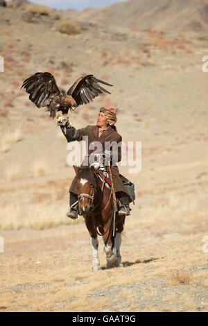 Eagle hunter mounted on Mongolian horse with his female Golden eagle (Aquila chrysaetos) at Eagle Hunters Festival, - Stock Photo